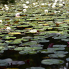 蛇の池と錦帯橋