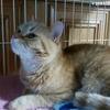 イケメンプリンス猫は多忙でお疲れのご様子