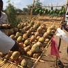 南スーダン蜂蜜ビジネスは継続しないと意味がない