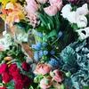 春のお花いっぱい