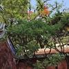 西川満と葉石濤:日台を結ぶ浪漫的な絆