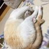 変な寝姿のライチ