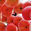 リンゴの木、下から見るか? 横から見るか?