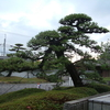 梅雨の季節の風物詩 庭木の剪定2017