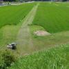 楽しい草刈り?!