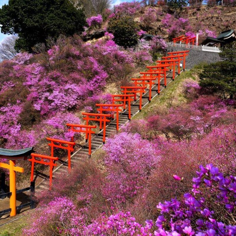 【エリア別】京都・写真映えでも期待が高まるツツジの名所7選
