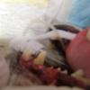 歯周病にかかりやすい犬種