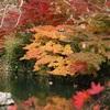 永観堂の秋の寺宝展2019。紅葉とライトアップ。