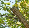 鳥撮りシーズン到来
