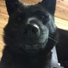 甲斐犬サンのお見舞いの巻〜元気出せよ( *`ω´) (´∀`)・・・ウン