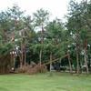 菊池恵楓園