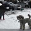 寒い、、、犬に洋服は必要ですか?