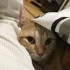 猫は去勢・避妊手術後も性格は変わりません!