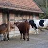 中四国地区養牛セミナー:岡山市