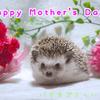 母の日ハーリー