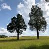 リアル 大草原の小さな家… 大自然の中で純粋な子供達と豊かな生活をするアメリカ人の生活… とても豊かな生活に