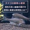 タナゴの繁殖・産卵!相性の良い雄雌の選び方や最適な飼育数とは