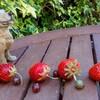 苺を巡る物語