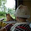 進化中!円山動物園はより子連れに優しくなっている。