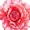 背景素材◆薔薇その2