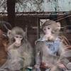 日光で動物三昧の一日を過ごしてみた!日光猿軍団と大笹牧場