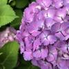 紫陽花の季節 リセット&スタート✨