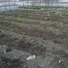 冬の間に地面を覆った雑草を刈る‥