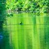 🐦野鳥の回【67】美しすぎる早朝。ヤマガラ・シジュウカラ・ムク・・ヒヨ・・