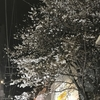 もうすぐ桜の季節