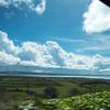 信州も本格的にスギ花粉の季節になってきました……:スギ花粉のないアイルランドへ行きたいな~