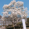 【韓国留学】大学院の修論を書いてる期間のお話👩🎓part2