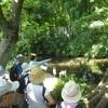 蘆花公園、実篤公園を訪ねる ウオーキング7月例会