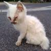 餌付け野良猫の被害は、蚤問題もあるようだ