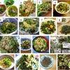 """スベリヒユ /ナデシコ目の植物たち2-2. ナデシコ目スベリヒユ科は,サボテン科のすぐとなりにある科.1.雑草!でも食べられる!山形県では蔬菜(野菜)/山菜山菜""""ひょう"""" 「多くのサイトがスベリヒユはかなりやっかいな雑草,でも食べられる」という文脈で解説し,「山形県では""""ひょう""""という名前の山菜として食べられる」とする指摘も.グーグル画像でトップ3の人気レシピは1.スベリヒユのおひたし 2.スベリヒユ(ヒョウ)の胡麻和え 3.スベリヒユの天ぷら"""