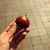《とことこ長野・第4町/小布施編》1.秋が旬!栗の町にはリンゴもブドウも!