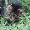 8月21日 護国寺から東池袋の猫さま & 有楽町交通会館スカイビアテラス