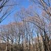 代々木公園ランニング〜気持ちの良い日差し〜
