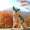 富士山と紅葉さんぽ♪