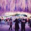 穴場 栃木県|あしかがフラワーパーク|東武ワールドスクエア|大谷石資料館|夜景鑑定士
