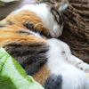 【愛猫日記】毎日アンヌさん#244