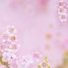 【桜が香るコーヒー】ドトール「プレミアムローストコーヒー桜」でお花見したいな