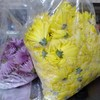 菊の花🏵️