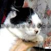 三毛ランジェロの保護日記:コラム編 Complete② ~猫の保護で考えること~