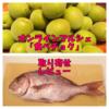 通販サイト『食べチョク』で野菜(梅)と魚介(真鯛)を取り寄せました(レビュー・口コミ)