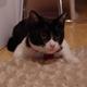 今日の黒猫モモ&白黒猫ナナの動画ー679