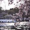「吉祥寺に行こう♪_#36_井の頭公園_AF Micro Nikkor 105mm F2.8D♪」_撮影特訓編
