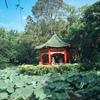 台湾ローカルの朝を体験できる癒しの台北植物園がオススメすぎるから是非行ってほしい