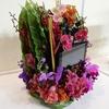 世界らん展2019-花と緑の祭典-に行ってきました その2(個別部門以外の審査部門)