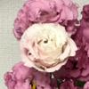【313】ピンクの薔薇
