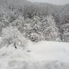 新幹線で白馬五竜&Hakuba47に日帰り初滑り アクセスと費用と滞在時間のまとめ